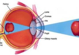 Dr Tai Smith - Optical Illusion